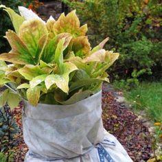 Byliny Lucyny Plants Vegetables