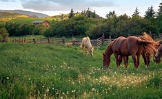 The Happy Cottage Dream Life, My Dream, Future Farms, Farms Living, Horse Farms, The Ranch, Beautiful Horses, Farm Life, Country Life