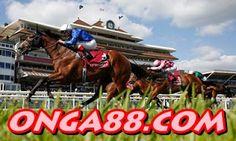 보너스머니♠️♠️♠️  ONGA88.COM  ♠️♠️♠️보너스머니: 보너스머니♥️♥️♥️  ONGA88.COM  ♥️♥️♥️보너스머니 Horses, Vehicles, Animals, Animales, Animaux, Car, Animal, Animais, Horse