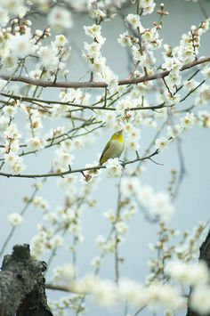 In the spring time, the only pretty ring time, when birds do sing... sweet lovers love the spring. ~William Shakespeare