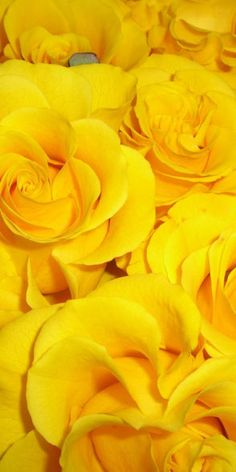 Yellow Pins For Pinterest @ http://baenk.com/yellow - yellow