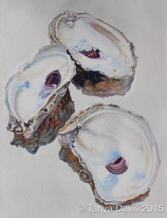 Tanya Davis Oyster Watercolor - Seen in Marina Del Rey Ritz Carlton Watercolor Paintings For Beginners, Watercolor Ideas, Watercolor Portraits, Coastal Pictures, Oyster Shell Crafts, Shell Painting, Beach Paintings, Painted Shells, Seashell Art