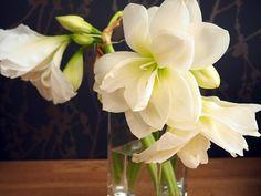paradies und das: Blumengruß Simple, Plants, Life, Paradise, Plant, Planets