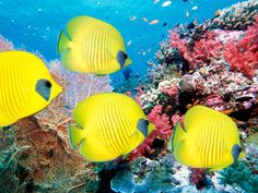 Coral, sea, Underwater world, fish, fish