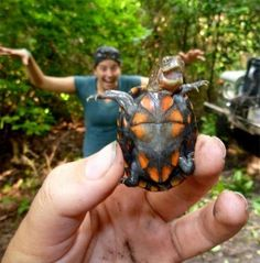 Funny animal pictures fresh from the net. Hand picked funny animal pictures of funny animals every hour. Animals And Pets, Baby Animals, Funny Animals, Cute Animals, Wild Animals, Happy Turtle, Turtle Love, Tiny Turtle, Cute Turtles