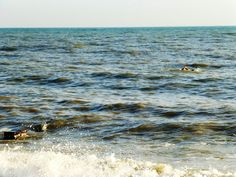 last swimmer in the sea - end of october hastings East Sussex©copyright julia fogg