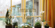 I'm not pretending to be an expert on terrariums but I have learned some interesting tips on making terrariums since I attempted a ...