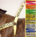 "Neon dog harness with temperament wording: ""Nervous, Caution, Adopt Me, Friendly, Deaf Dog, Blind Dog, etc."""