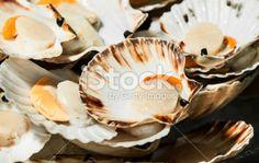 Seafood: fresh Scallops at Market - Stock Image Royalty Free Stock Photo