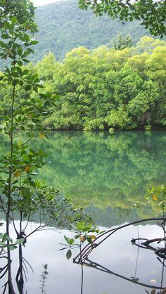 Daintree Rainforest - Queensland - Australia