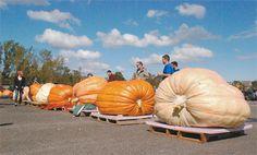 Why not a beanbag chair that looks like a giant pumpkin?