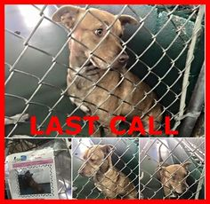 LAST CALL! LAST CALL! LAST CALL! Rosie-#A1666657 2 yo red terrier mix. Calm, friendly, med energy. At MDAS — hier: Miami Dade County Animal Services. https://www.facebook.com/urgentdogsofmiami/photos/pb.191859757515102.-2207520000.1420156043./901055553262182/?type=3&theater