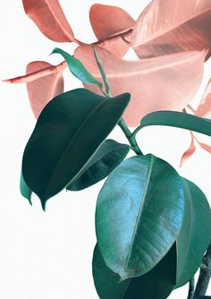 Plant Prints Printable Wall Art B Art Tropical, Tropical Leaves, Tropical Prints, Desenio Posters, Botanical Art, Botanical Gardens, Pink Aesthetic, Leaf Prints, Wall Collage