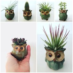 "65 Likes, 5 Comments - Miss Cellaneous (@misscellaneous.ca) on Instagram: ""We love owls #mimicry #mimicryplant # #cactus #forthehome #indoorplants #love #fun # #plantlove…"""