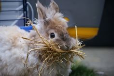 YES, IT'S A BUNNY PHOTO. You know you think it's cute, too.