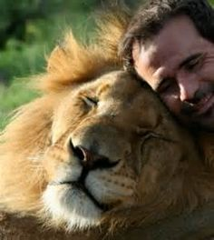 kevin richardson lions south africa - Yahoo Image Search results