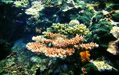 https://flic.kr/p/tijB6t | Corals