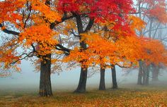 Autumn leaves and fog work well together.