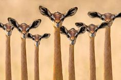 No this is not an alien species... This is in fact a herd of Gerenuk, an antelope species found in East Africa. Source - Africa Geographic