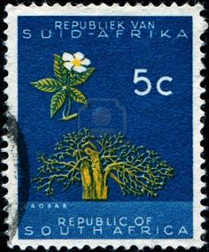 SOUTH AFRICA - CIRCA 1961: A stamp printed in the South Africa shows Baobab (Adansonia digitata), circa 1961  Stock Photo - 13281196