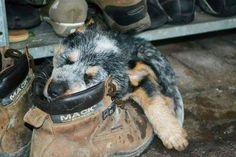 Something happens prior to #PuppyFriday... Sleep happens! :-)