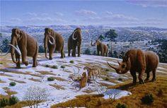 Ice age fauna of northern Spain - Mauricio Antón - Nosorožec srstnatý – Wikipédia Prehistoric World, Prehistoric Animals, Prehistoric Timeline, Early Humans, Archaeology News, Extinct Animals, Mundo Animal, Ice Age, Fauna