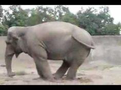 Drôle     ✖✖✖ Top 15 Animales Graciosos en la Web ✖✖✖