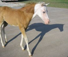 white faced foal