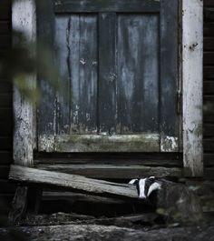 une-maison-abandonnee-dans-les-bois-envahie-par-des-dizaines-d-animaux-en-tous-genres17
