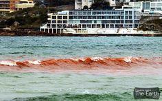 Кровавый океан в Австралии