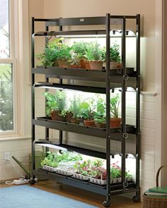mount grow light underneath a shelf and you can have flowers year