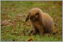 Brown Rabbit Animal Photo