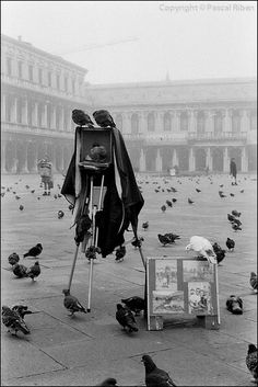 #pascalriben - Venice, Italy - BIRDS black and white photo gallery by Pascal RIBEN