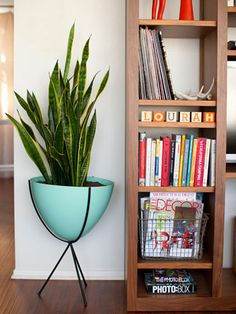 9 Ways To Freshen Your Space With Plants