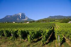 Route gourmande des vignobles de Savoie