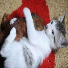 Animais que adotaram filhotes de outra espécie: fotos