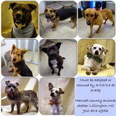 Lillington NC: Harnett County Animals need rescue/adoption by 4/15/14