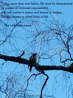 Human Rights Quotes, Art Quotes, Sustainability, No Response, Action, Facebook, News, Check, Animals