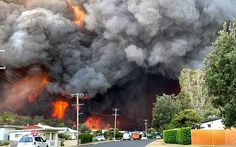 Multiple homes have been destroyed as more than a dozen bushfires rage across New South Wales (pictured bushfire near Taree on state's mid-north coast) Australian Bush, Wild Fire, Coast Australia, Australia Travel, Thing 1, East Coast, North Coast, Climate Change, Cool Photos