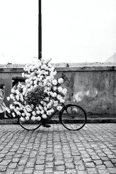 Piccsy :: Flavio Damm, fotografo Brasiliano.