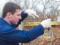 V únoru čeká pěstitele révy vinné nejdůležitější práce ve vinici, řez révy. Aby zdárně plodila, prořezat musíme i révu pěstovanou ve skleníku nebo na pergolách. Fruit Trees, Rv, Pergola, Flora, Home And Garden, Backyard, Animals, Gardening, Ideas