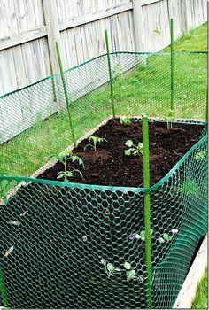 Raised Bed For Blueberries With Bird Netting Garden