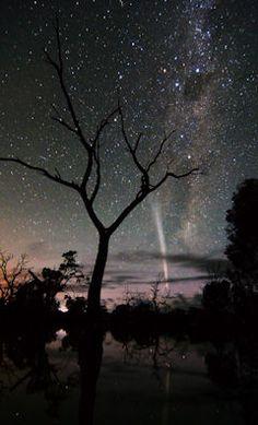 Comet Lovejoy  Photo Credits:  www.spaceweather.com  Wayne England,   Poocher Swamp west of Bordertown, South Australia  Dec. 25, 2011