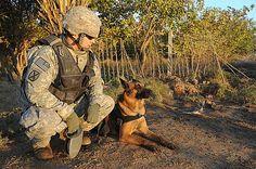 Entrenamiento de los perros detectores de explosivos de los soldados estadounidenses en Afganistán