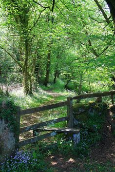 Footpath through Bluebell Wood - Dartmoor, England