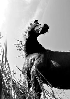 <3 black and white is just so beautiful to me...and so is this horse!