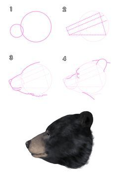How to Draw Animals: Bears and Pandas, and Their Anatomy