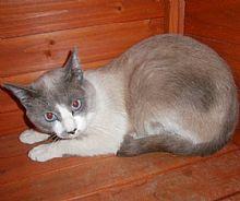 Gato Mat.¿Se puede ser más bonito? Animals, Kittens For Adoption, Foot Prints, Bonito, Gatos, Animales, Animaux, Animal, Animais