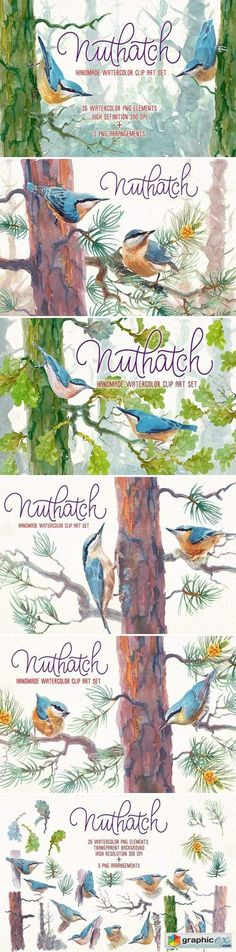 Nuthatch watercolor clipart set  stock images
