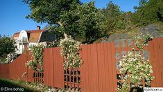 trädgård,staket,färgsättning,falurött